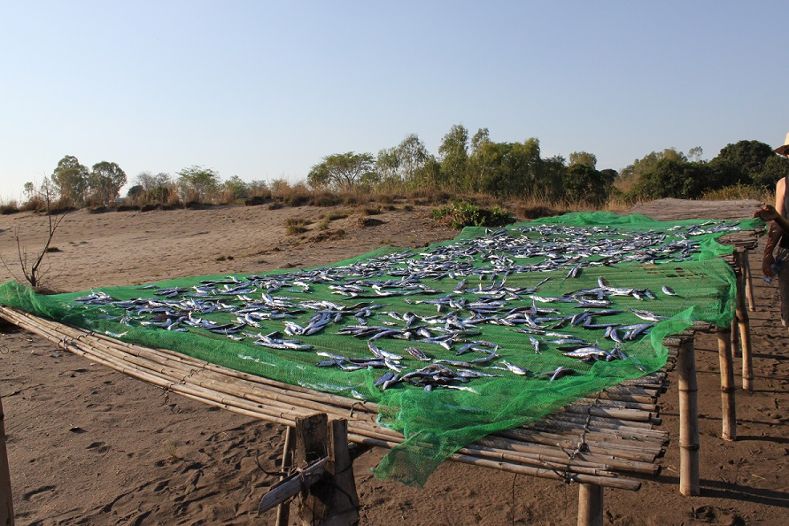 fish_drying